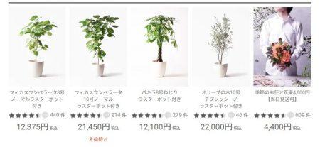 ひとはなの観葉植物