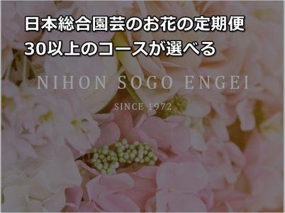 日本総合園芸のお花の定期便