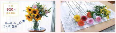 ピュアフラワーのお花はやすいのにたくさん届く画像